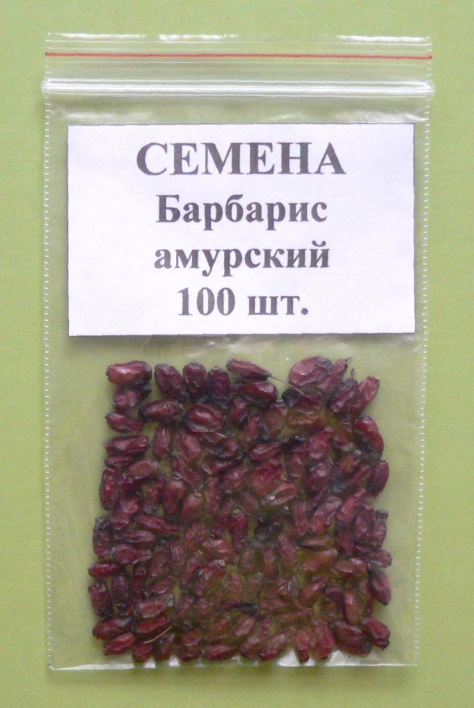 семена барбариса лучше садить в коже одеть термобелье
