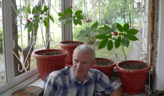 Женьшень и его выращивание в сибири 80